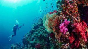 غوص شاطئ جزيرة نايفارو المالديف