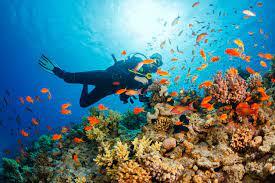 الغوص في أعماق المياة واحدة من أبرز التجارب في جزر المالديف
